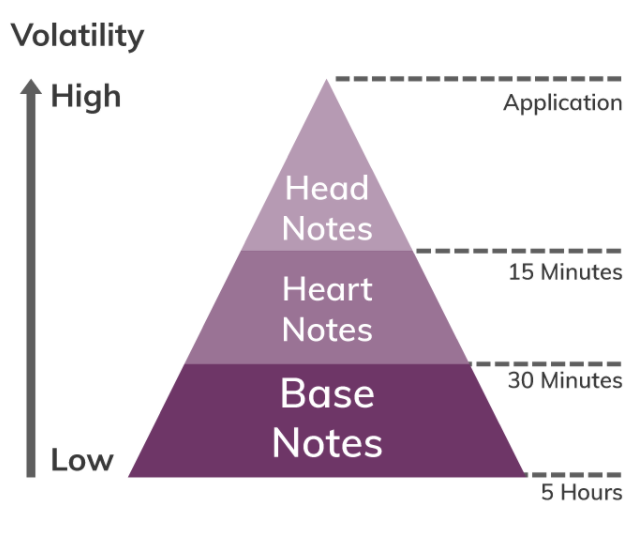 Perfume Pyramid - Top notes, middle notes and base notes