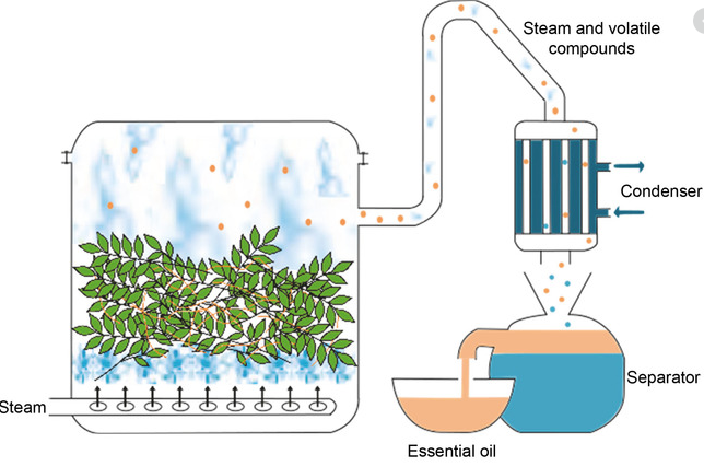 Steam distillation process involved in perfume making